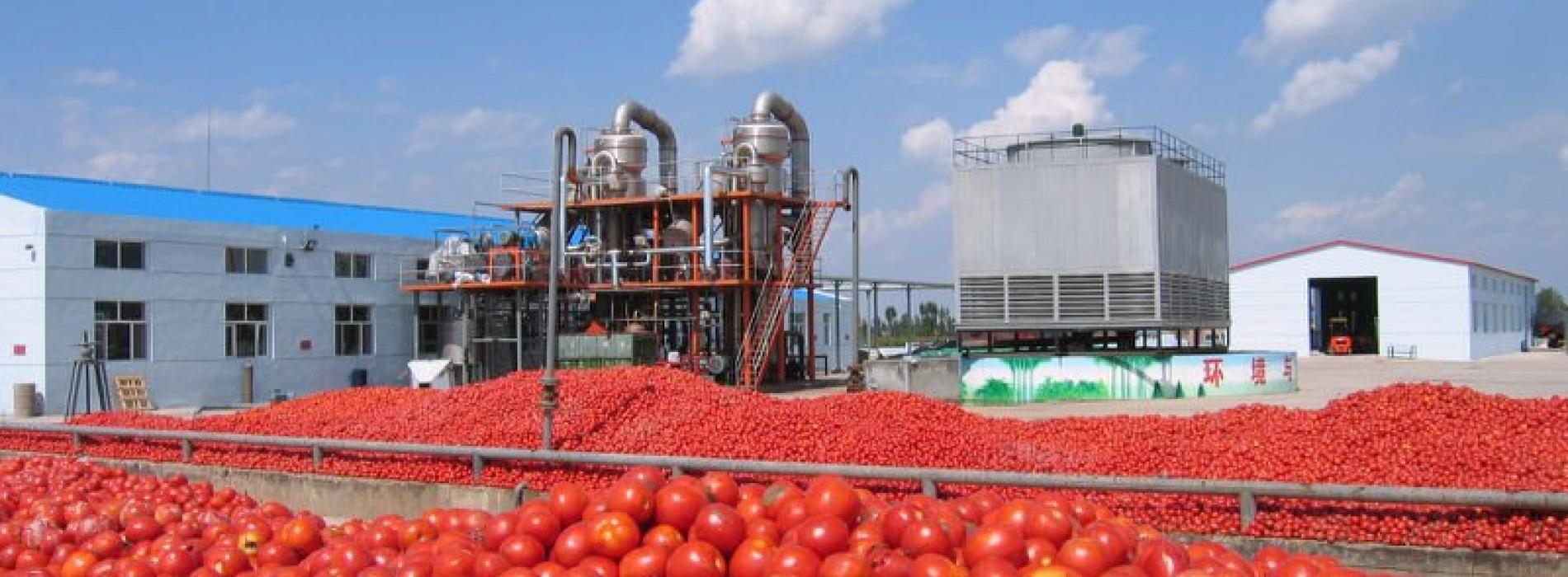 Nigeria – Opportunità nella filiera del pomodoro