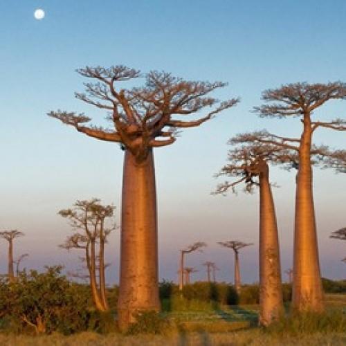 Madagascar – Scheda Paese