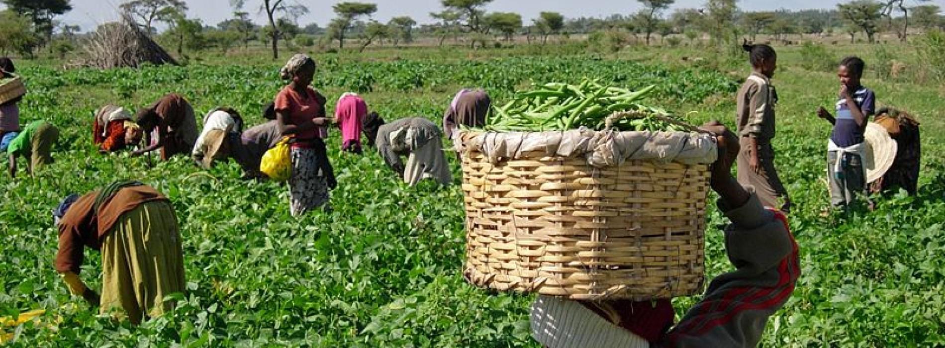 Etiopia: il paese con la più rapida crescita al mondo