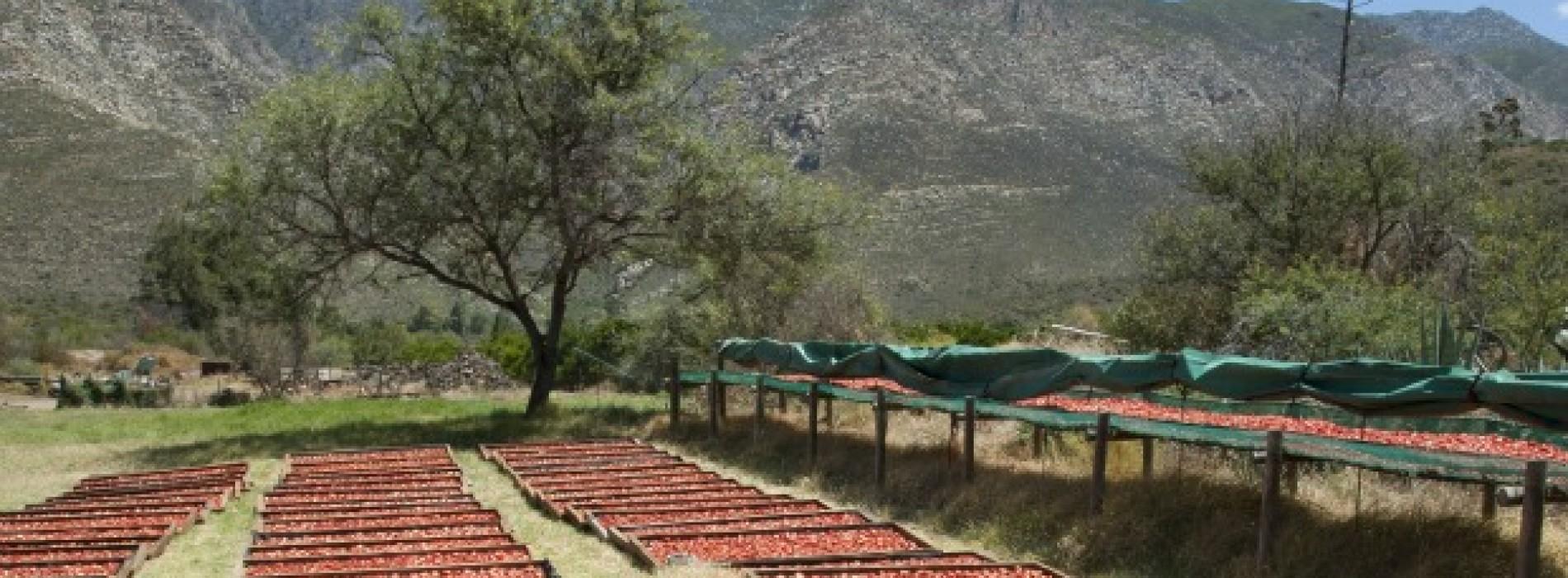 Le ricche famiglie americane guardano all'Agribusiness in Africa