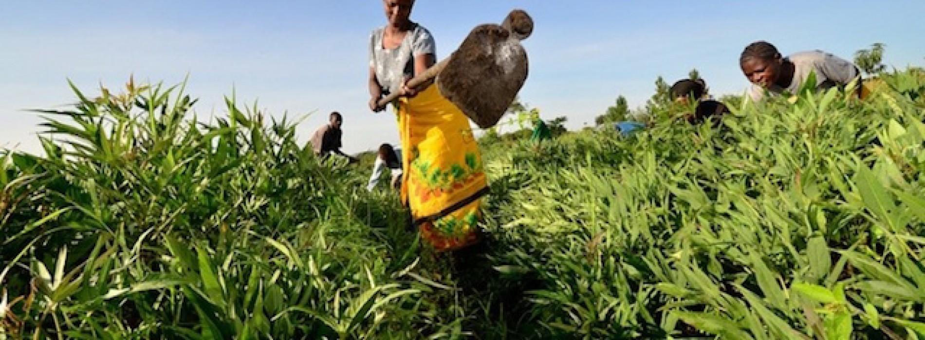 Africa, il miracolo della crescita dell'Agricoltura