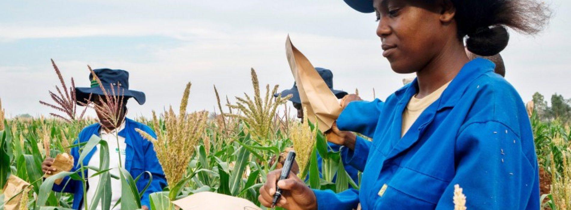 Agricoltura in Africa: Piantare il seme della crescita