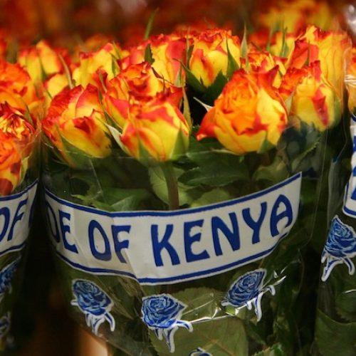 Kenya: cresce del 18% l'export  di fiori