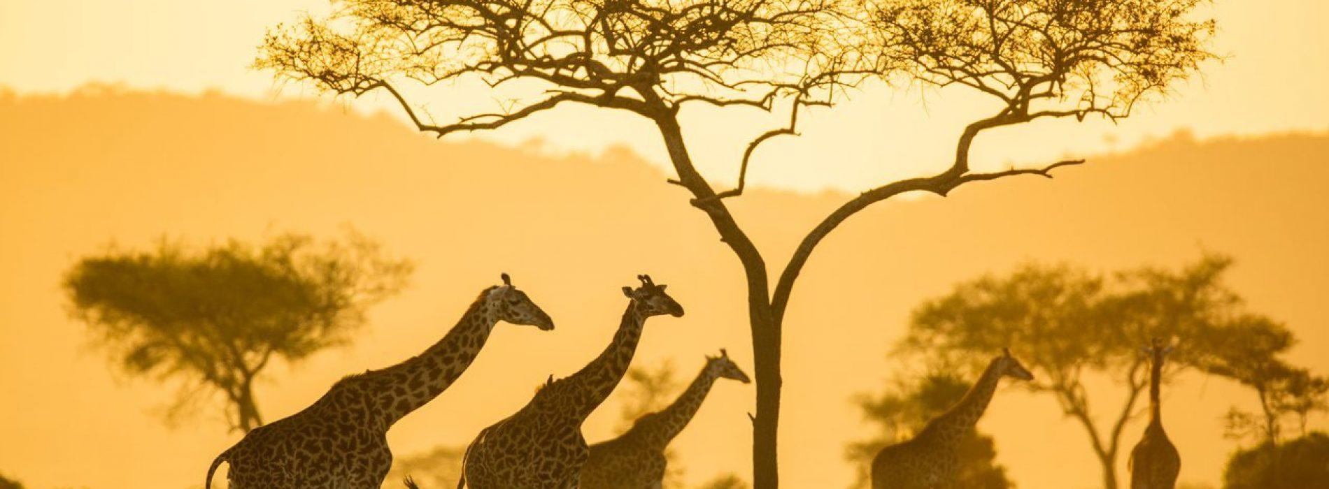 Il turismo virtuale in Africa si sviluppa in mezzo alla pandemia del coronavirus.