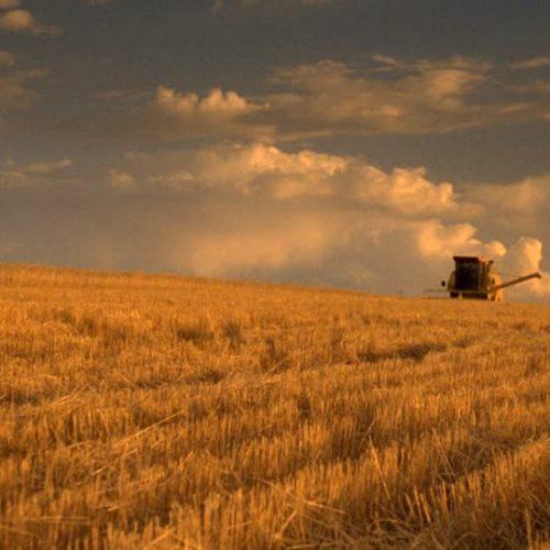 Sud Africa: prevista produzione record di grano per la stagione 2020/2021
