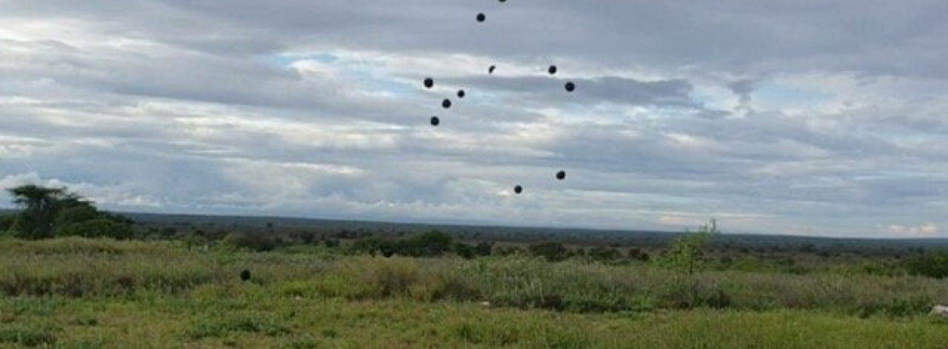 """KENYA: Seedballs offre """"bombe di semi"""" per la riforestazione del territorio"""