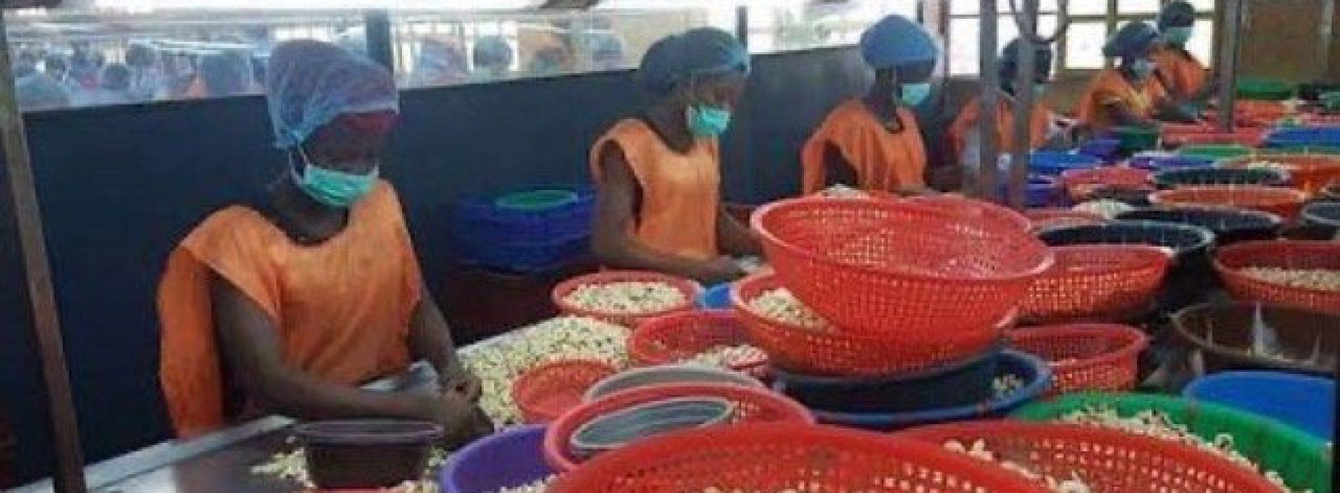 Nigeria: il settore degli anacardi procede senza una strategia governativa