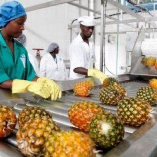 Nigeria, l'Italia forma le imprese agroalimentari per rendere il settore più competitivo