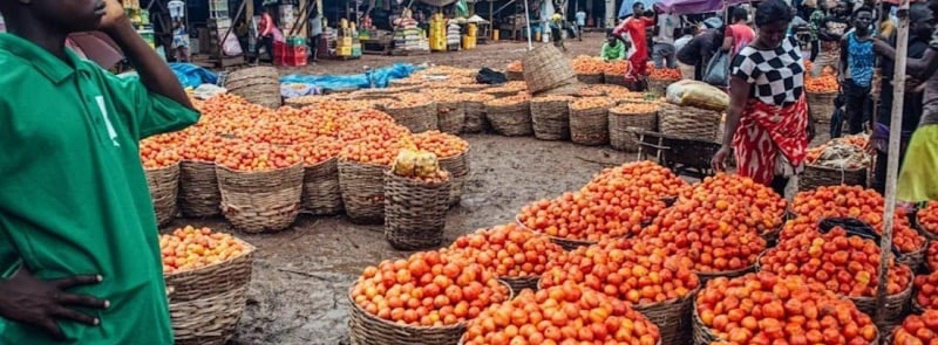 Nigeria, la carenza di pomodori blocca l'impianto della Dangote
