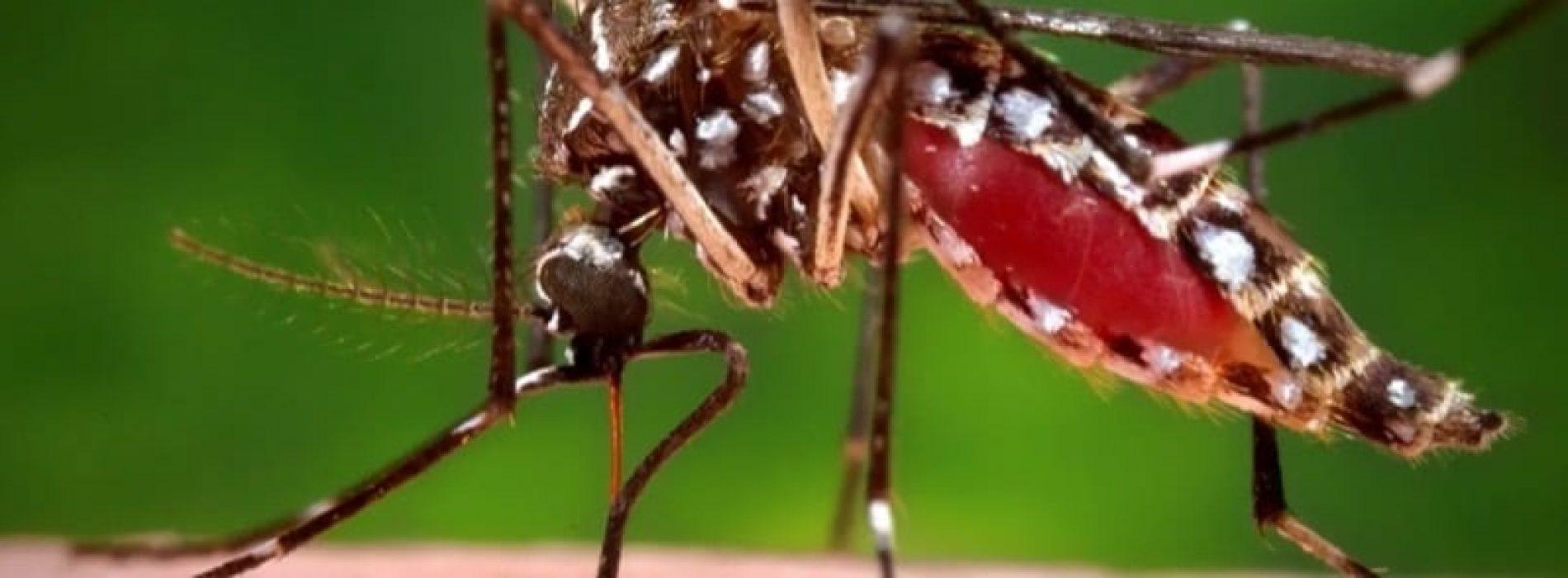 BioNTech mira a sviluppare il primo vaccino contro la malaria a mRNA e la capacità di produrlo in Africa